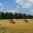 Time for the Hay!!! by Susan Blevins