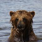 Grizzly Bear - Alaska by Melissa Seaback
