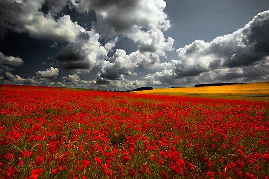 Norfolk Poppy Fields by Norfolkimages