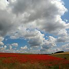 Poppy Landscape by Norfolkimages