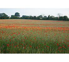 Poppy Field In Norfolk Photographic Print