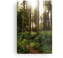 Norfolk Woodland Metal Print