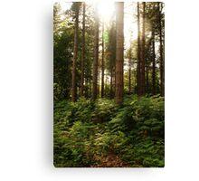 Norfolk Woodland Canvas Print