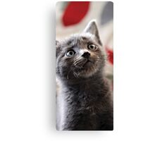Kitten X Canvas Print