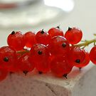 Red Currant by vbk70