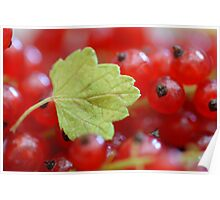 Red Currant II Poster
