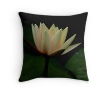 Contrast.    Peach/Yellow waterlily Throw Pillow