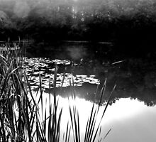 Lillypads and Pond Reeds - Ardingly by Matthew Floyd