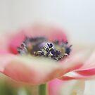 Anemone Aquarel by IngeHG