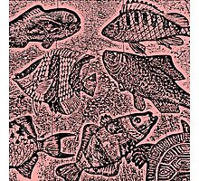Fish #3 in Black & Pink Photographic Print