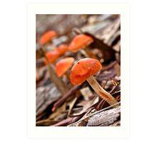 Mushroom are back Art Print