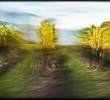 Drive by shooting: The vineyards #01 by LouD