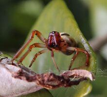 Spider Macro by jaskel