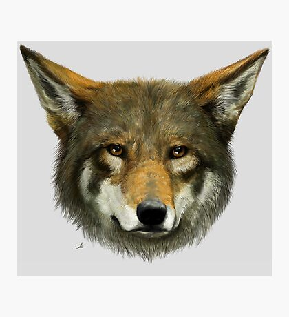 Wolf face Photographic Print