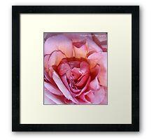 Femininity (Rose) Framed Print