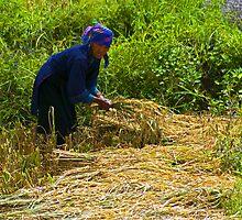 Harvest. by bulljup