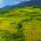 Rice Terrace4. by bulljup