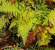 Autumn Ferns and Wildflowers by MotherNature