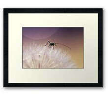 A small and fluffy world Framed Print