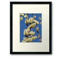 Spring Willows Framed Print