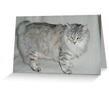 Adorbz British Semi-longhair Greeting Card