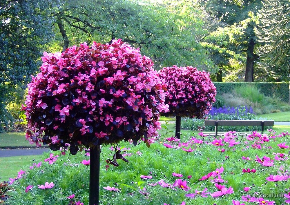 Garden of Flowers & Trees by Chris Goodwin