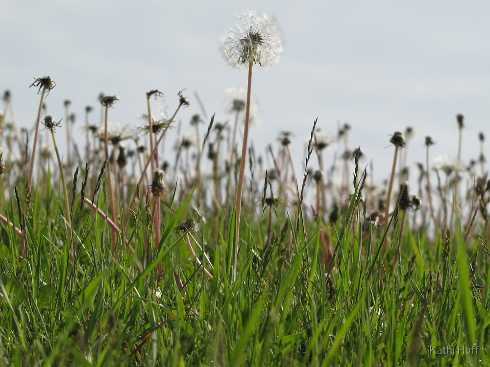 Tall Weeds by Kathi Arnell