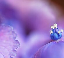A blue crown ... by IngeHG