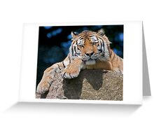 Take my picture?  Am I bovvered? Greeting Card