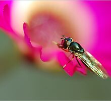 A Bug's Life by janrique