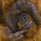 Orangutan by cameraimagery