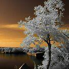 Summery white by Marzena Grabczynska Lorenc