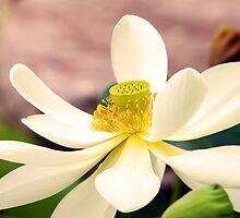 Water Lotus by Diane McDonald