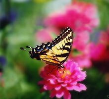 Tiger swallowtail..... by DaveHrusecky
