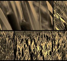 Cattails in Sepia III by leapdaybride