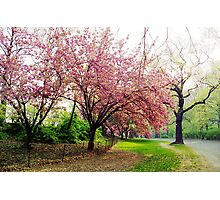 Spring in Central Park, New York City Photographic Print