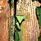 Peeling paint on an old wooden door #2 by Michele Filoscia