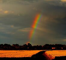 Rainbow over wheat fields, Low Coniscliffe, England ( 2 FT) by Ian Alex Blease