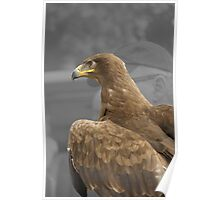 Steppe Eagle at the New Forest Show Poster