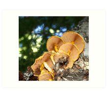 Mushroom Perspective Art Print