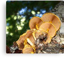 Mushroom Perspective Canvas Print