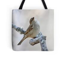House sparrow poses for the camera Tote Bag