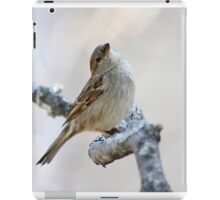 House sparrow poses for the camera iPad Case/Skin