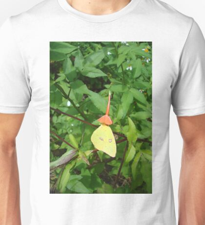 Cloudless Sulphur butterfly in Mahogany Vine T-Shirt