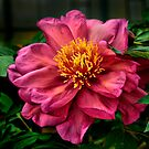 A Red Flower For Love by Charles & Patricia   Harkins ~ Picture Oregon