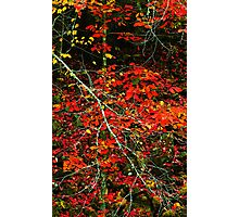 AUTUMN COLOR Photographic Print