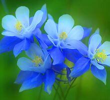 Columbine Bouquet by Steve  Taylor
