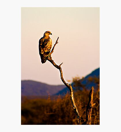 Tawny Eagle Photographic Print