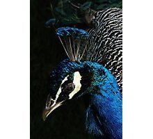 Cocky Photographic Print