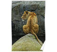 Pride Rock? Poster